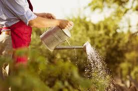 Gardener Business