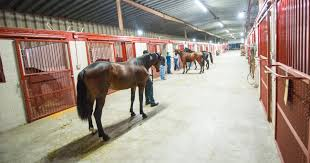 Horse Boarding Business