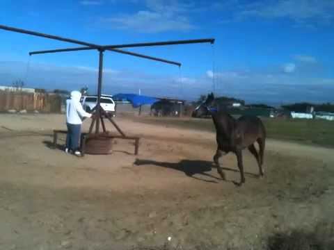 Horse Exerciser Business