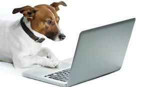 Pet Food and Supplies Delivery Business