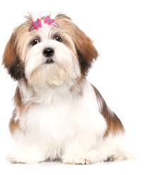 Pet Grooming Service Business