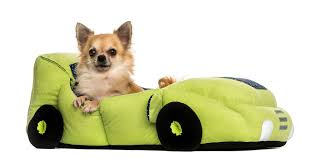 Pet Products Business