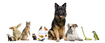 Pet Sitting Home Care Service