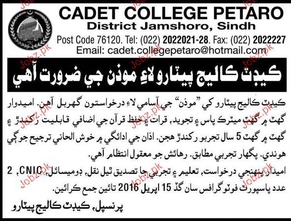 Moazan Job in Cadet College Petaro