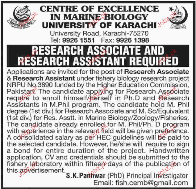Research Associates Job in University of Karachi
