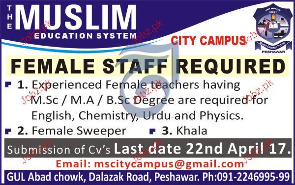 Female Staff Job in The Muslim Education System