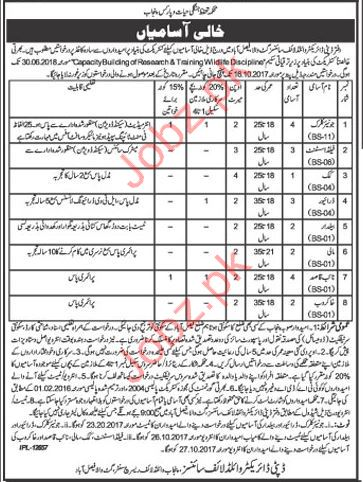 Punjab Wild Life Office & Field Jobs