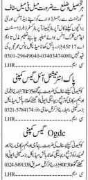 Security Guards & Office Staff Jobs
