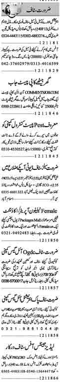 Male & Female Staff Jobs Open