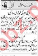 Male & Female Staff Jobs Career Opportunity