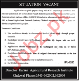 Barani Agriculture Research Institute Job 2019 in Chakwal