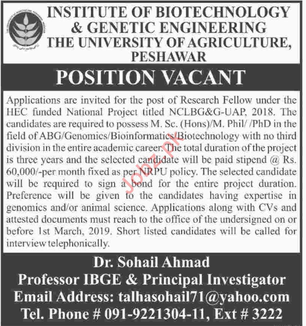Institute of Biotechnology & Genetic Engineering KPK Jobs
