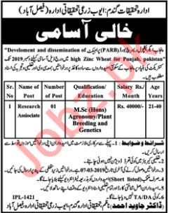 Ayub Agriculture Research Institute Job 2019 in Faisalabad