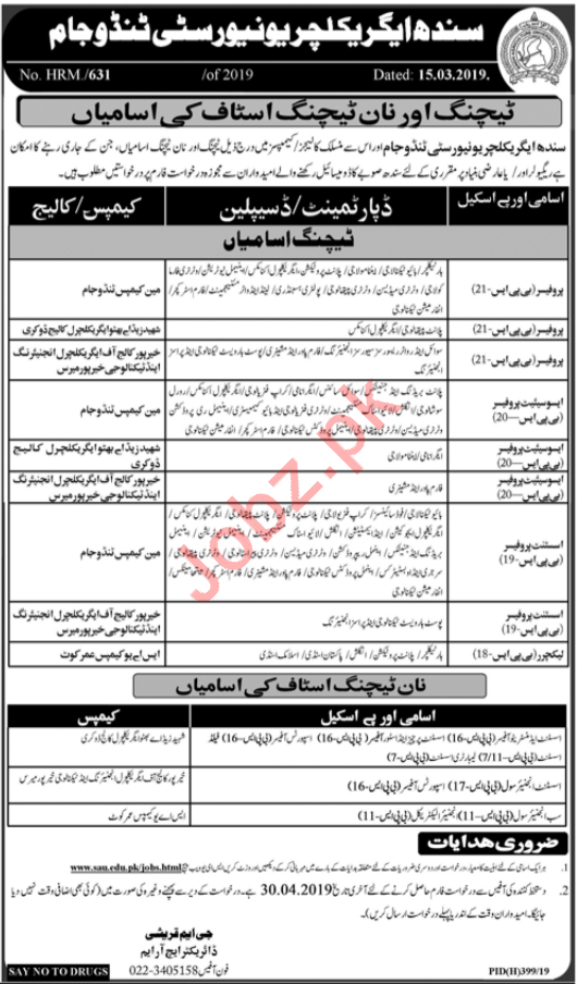 Sindh Agriculture University Teaching & Non Teaching Jobs