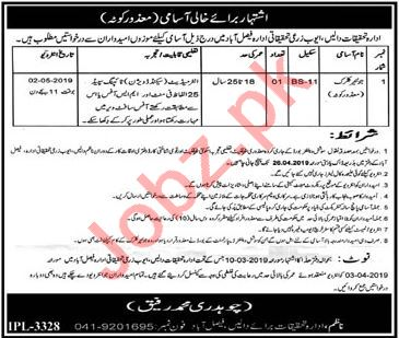 Ayub Agriculture Research Institute Clerk Job in Faisalabad