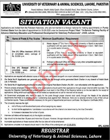 University of Veterinary and Animal Sciences Jobs in Lahore