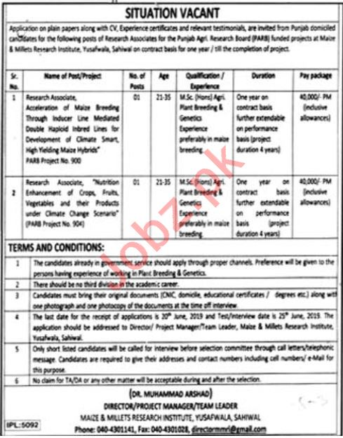Maize & Millets Research Institute Sahiwal Jobs 2019