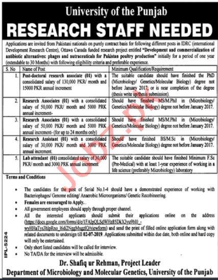 Punjab University PU Lahore Jobs 2019 for Research Associate