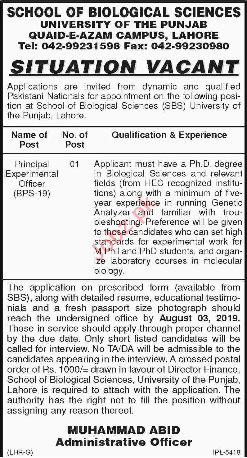 University of Punjab Jobs 2019 in Lahore