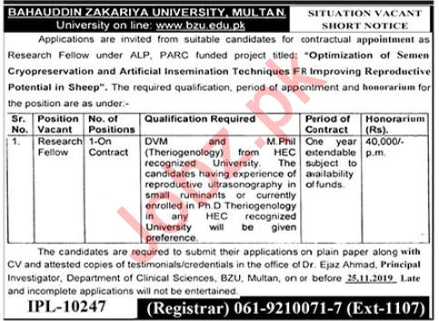 BZU Research Fellow Job in Multan 2019