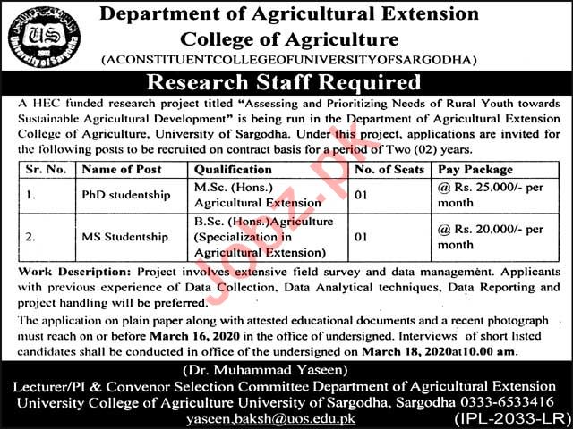 College of Agriculture University of Sargodha Jobs 2020