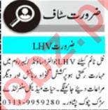 Medical Staff Jobs 2020 in Peshawar KPK