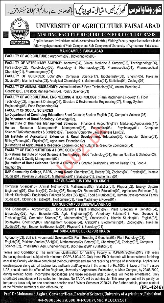 University of Agriculture Faisalabad Visiting Faculty Jobs