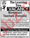 The Learning Tree TIT Lahore Jobs 2020 for Teachers