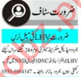 Lady Health Visitor & Lady Doctor Jobs 2020 in Peshawar