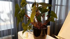 Office Plant Care Business