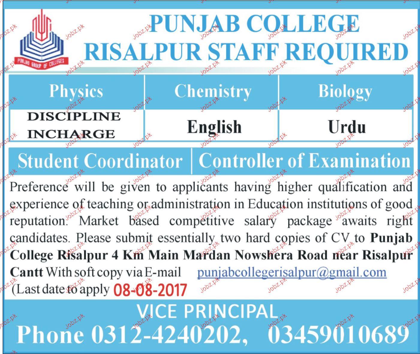 Punjab College Risalpur Job Opportunity