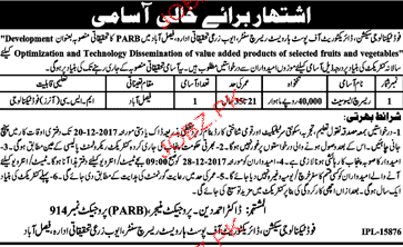 Ayub Agriculture Research Institute Faisalabd Jobs