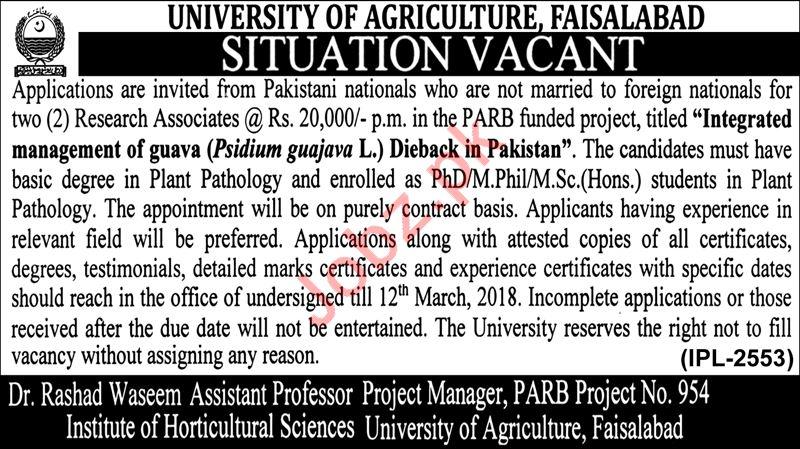 Institute of Horticultural Sciences UAF Faisalabad Jobs 2018