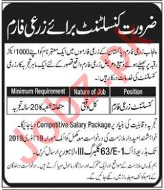 Punjab Agriculture Farm Consultant Job 2019 in Kasur