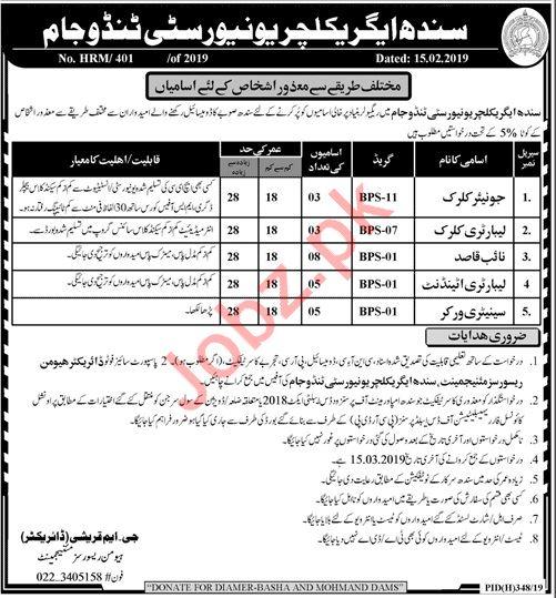 Sindh Agriculture University Tando Jam Sindh Jobs 2019