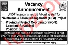 UNDP Sustainable Forest Management Project Jobs 2020