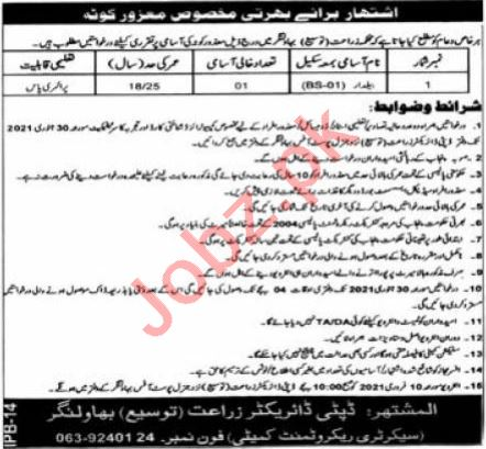 Agriculture Department Bahawalnagar Jobs 2021 for Baildar