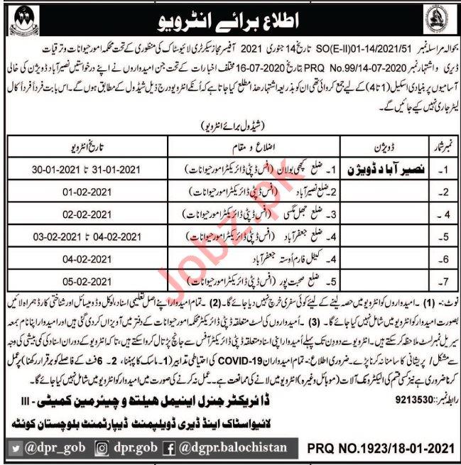 Livestock & Dairy Development Department Naseerabad Jobs