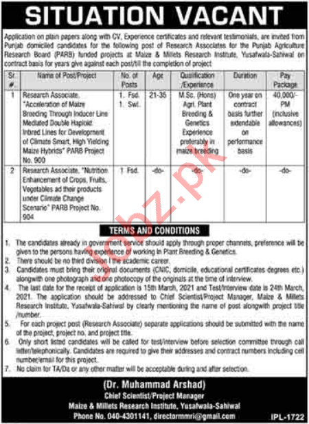 Maize & Millets Research Institute MMRI Yusafwala Jobs 2021