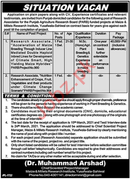 Maize & Millets Research Institute MMRI Sahiwal Jobs 2021