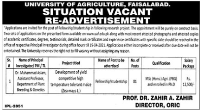 University of Agriculture Job 2021 in Faisalabad