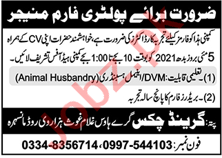 Grand Chicks Mansehra Jobs 2021 for Poultry Farm Manager