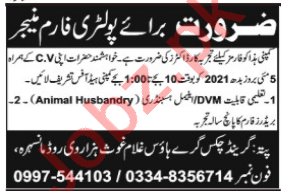Poultry Farm Manager Jobs 2021 in Grand Chicks Mansehra