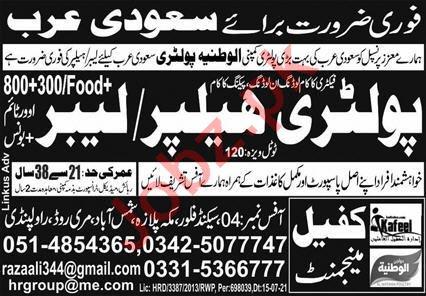 Poultry Helper & Labour Jobs 2021 in Saudi Arabia