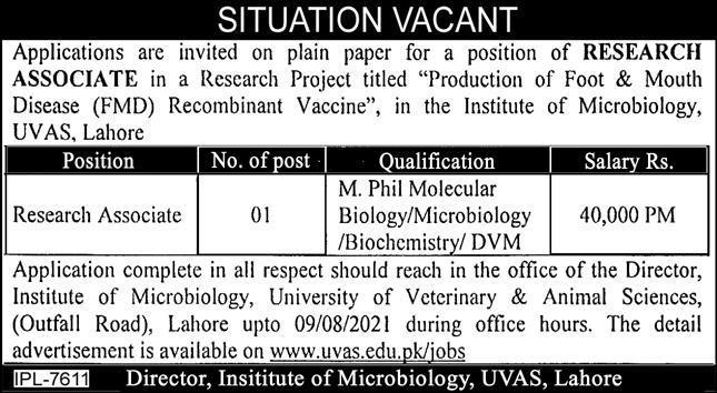 Research Associate Jobs in UVAS Lahore
