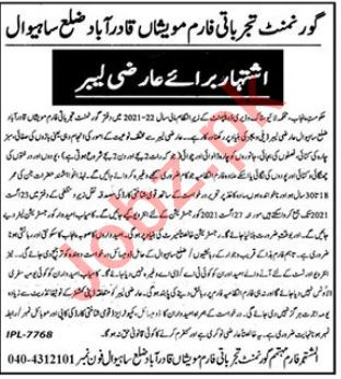 Livestock Experiment Station Qadirabad Sahiwal Jobs 2021